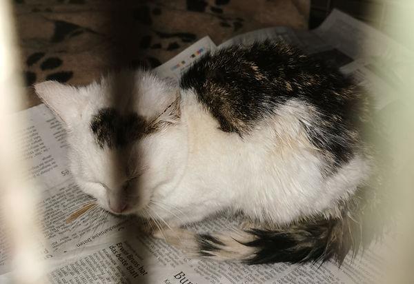 kitten moorsee 12-15.jpg