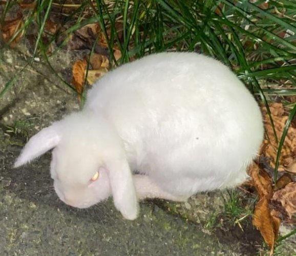 kaninchen nham 11-6.jpg