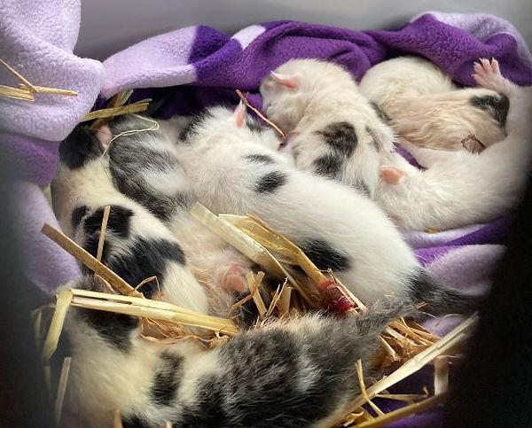 kitten 8 bra 8-21.jpeg