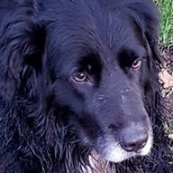 11-10 hund.jpg