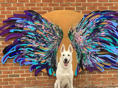 Dog with wings.jpg