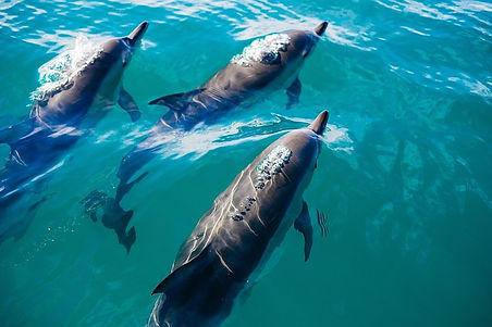 Port Stephes Dolphin Watching Tour