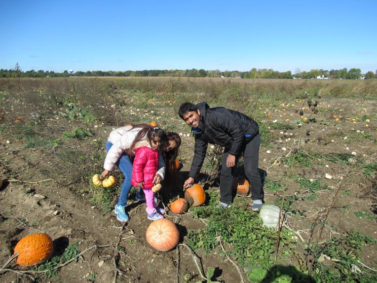 picking a pumpkin