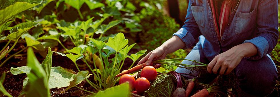 conception-comment-faire-permaculture.jp