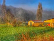 16 - Golden fields