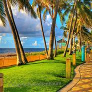 26 - Palm Trees Wake Up