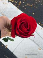 40 - Found Rose