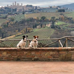 14 - Dogs of Tuscany
