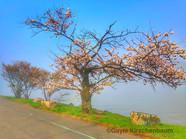 12 - River Tree