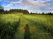 1 - Shadow Fields