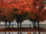 7 - Red River Trees