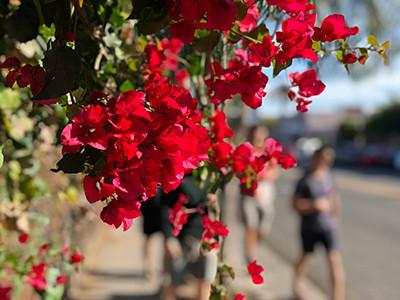 flowersLA.jpg