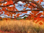 2 - Orange Leaves