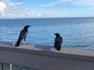 9 - Bird Connection