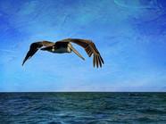 11 - Pelican Soars