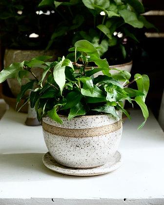 Raw Stripe Planter & Plate