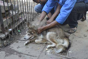 Animal Nepal Banner.PNG