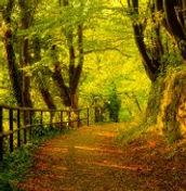 Autumn-Forest-300x169.jpg