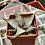 Thumbnail: Hybr: Aloe descoingsii x Aloe 'Donnie'