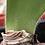 Thumbnail: Haemanthus paucifolius