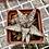 Thumbnail: Aloe hybrid