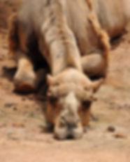 camel-993822_640.jpg
