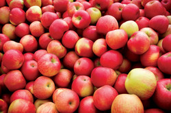 Coal Valley Orchard Apples