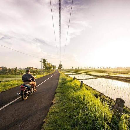 Road along a rice fields in Bali
