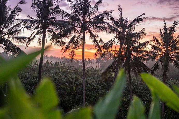 Nature in Bali