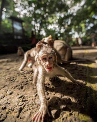 Monkeys in Bali
