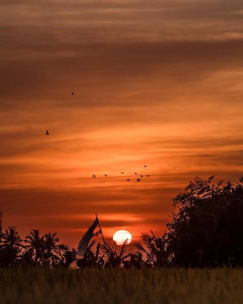 Sunset time in jungle