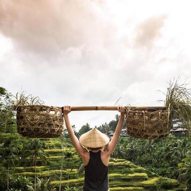 Rice terrases in Ubud