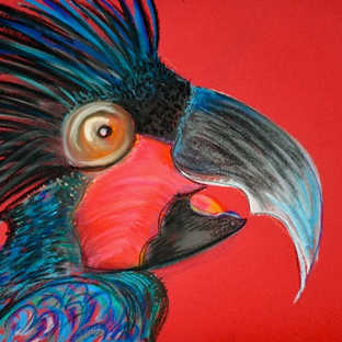 black_cockatoo_pastels
