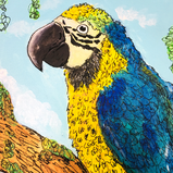 Macaw.png