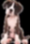 Tegernsee Urlaub mit Hund