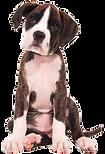 Ferienwohnung Hund Tegernsee