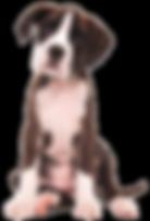 Ferienwohnung, Tegernsee, Hund willkommen