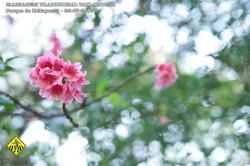 MASSAGEM_THAI_009.jpg