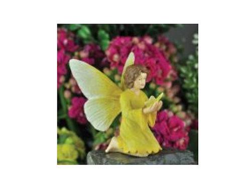 Fairy Yellow Alameda