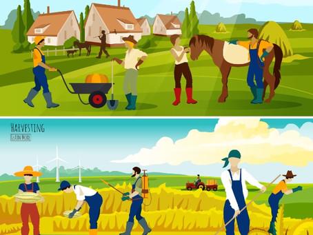 Entenda sobre a Permacultura