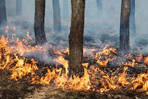 Calendário de Emergência Ambiental contra queimadas é lançado