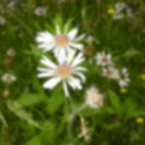 Texas Wildflower Essences Flower Essences