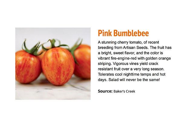 Pink Bumblebee.jpg