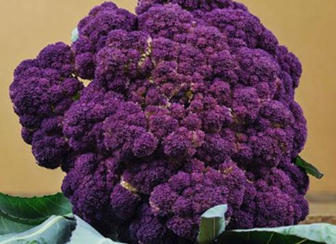 Purple of Sicily