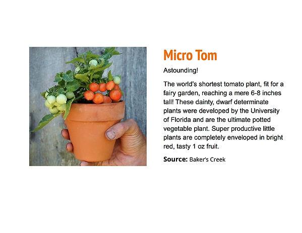 Micro Tom.jpg