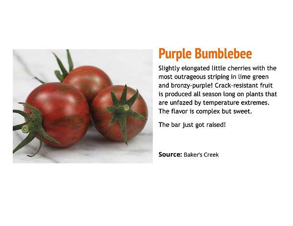 Purple Bumblebee.jpg
