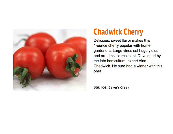 Chadwick Cherry.jpg
