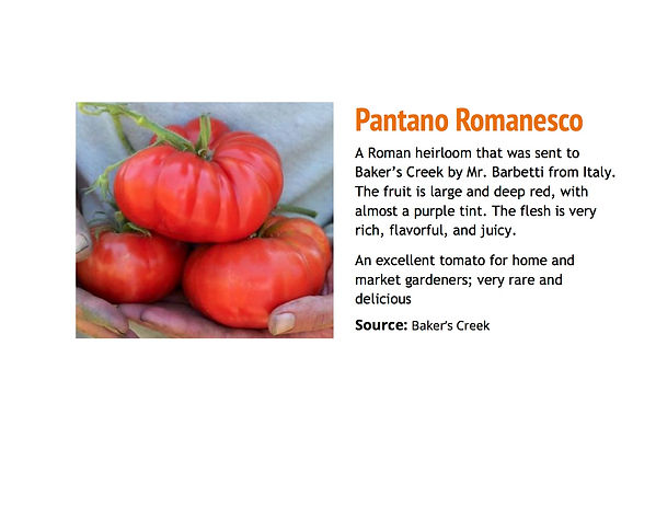 Pantano Romanesco.jpg
