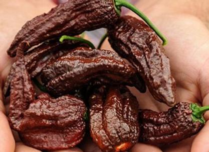 Chocolate Bhut Jolokia (Ghost)