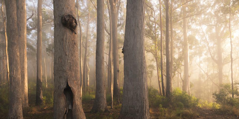 Forest Grump